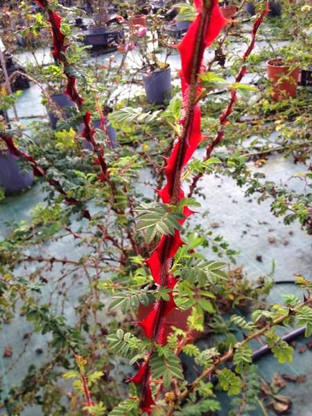 bacche e piante autunnali_00001