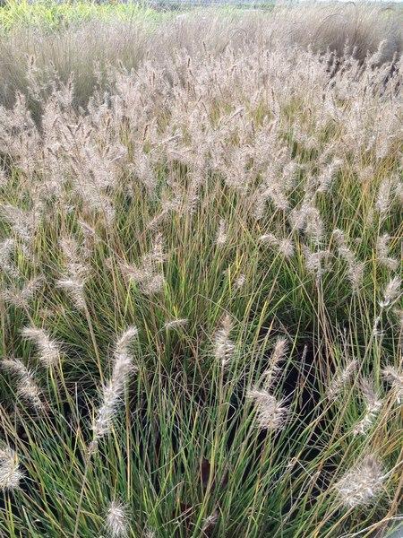bacche e piante autunnali_00003
