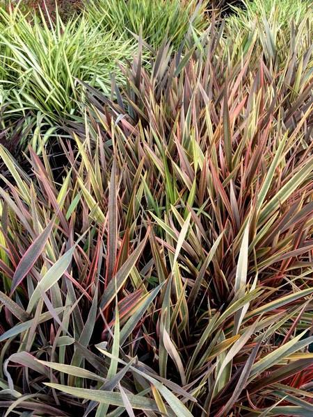 bacche e piante autunnali_00007