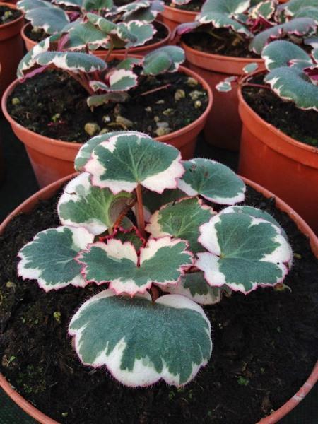 bacche e piante autunnali_00011