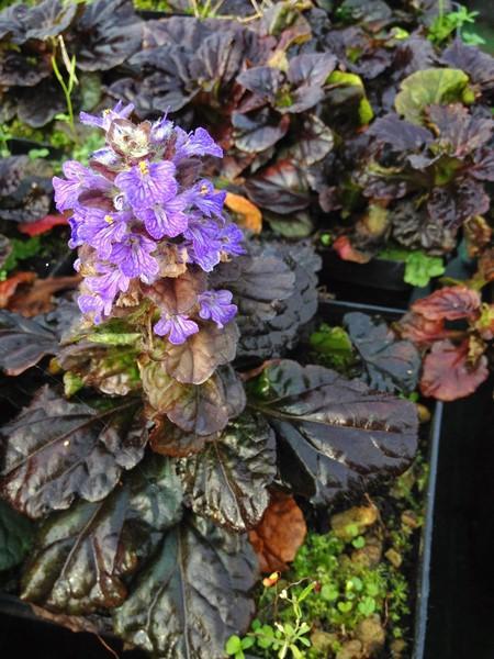 bacche e piante autunnali_00013