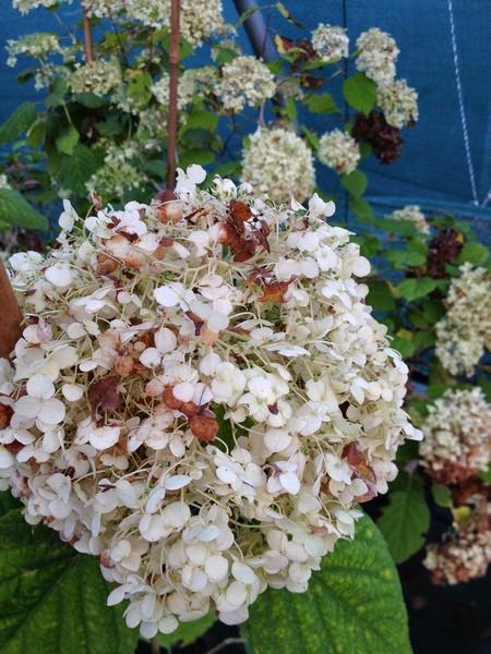 bacche e piante autunnali_00015