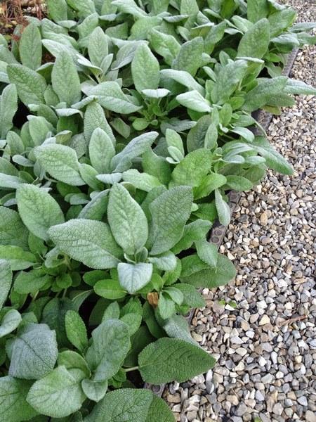 bacche e piante autunnali_00016
