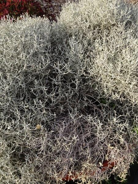 bacche e piante autunnali_00017