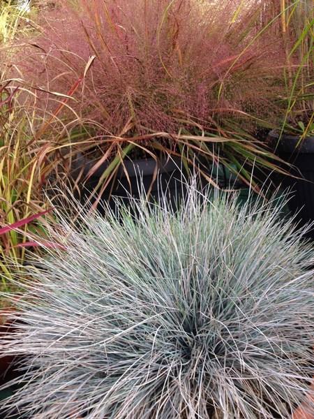 bacche e piante autunnali_00018
