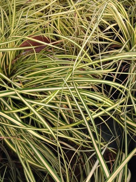 bacche e piante autunnali_00020