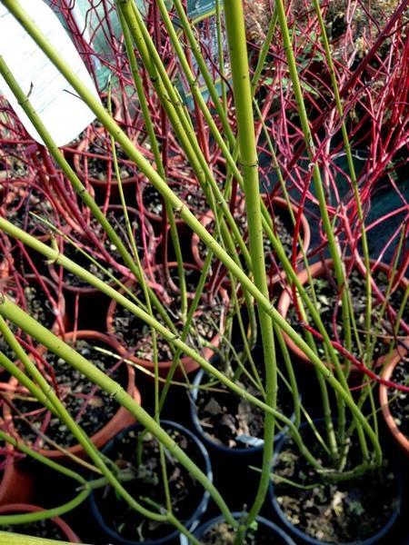 bacche e piante autunnali_00023