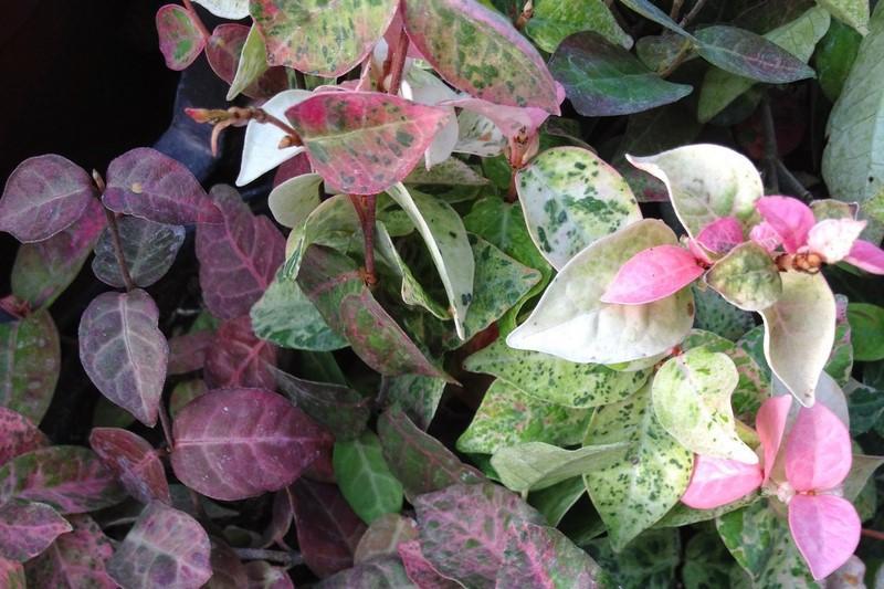 bacche e piante autunnali_00024