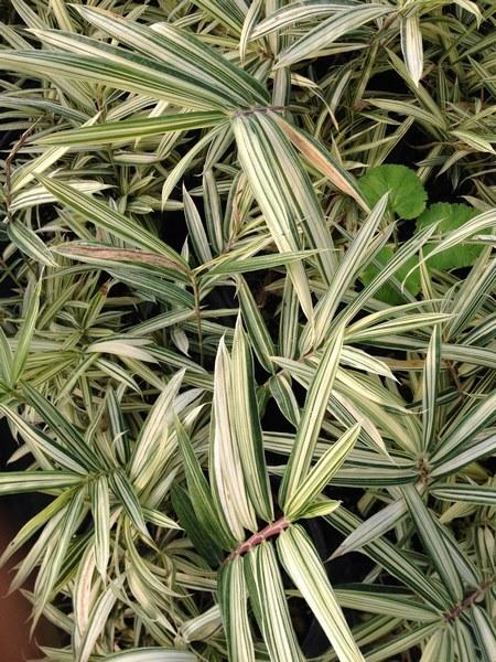 bacche e piante autunnali_00025