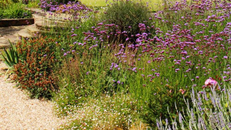 progettazione-creazione-giardini_00007