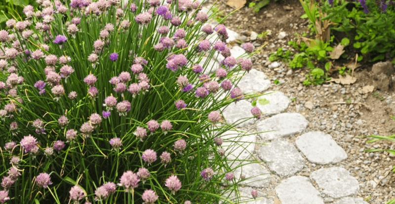 progettazione-creazione-giardini_00017