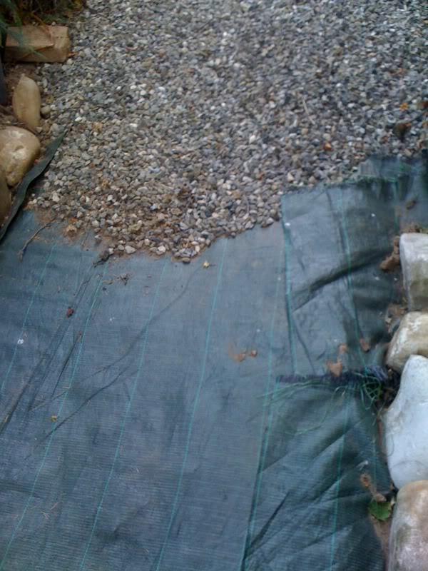 Piante Tappezzanti Calpestabili : Cosa mettere al posto dell erba in giardino