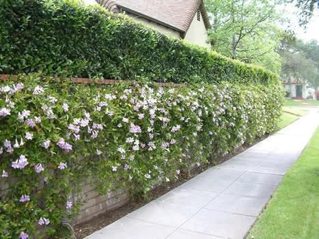 Coprire un brutto muro di cemento trompe l 39 oil pitture - Decorazioni muri esterni ...