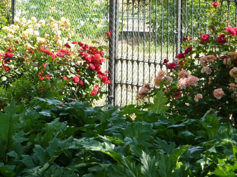 Il mio giardino di giugno un quadrato di giardino