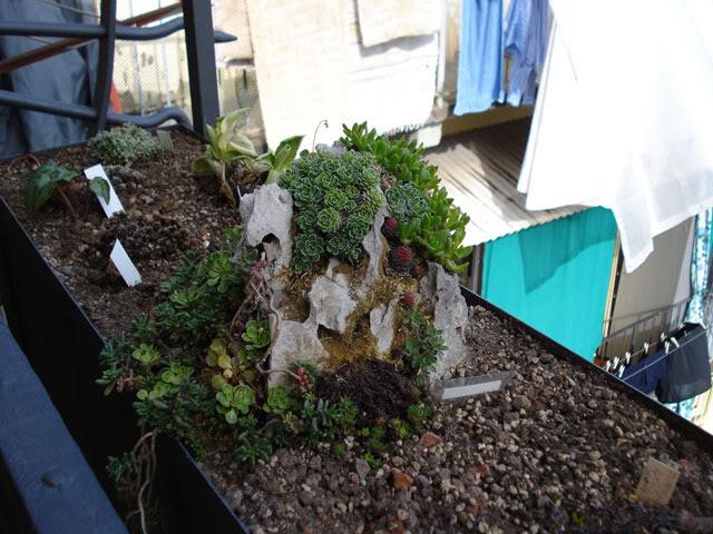 Le jardin suspendu il mio giardino in balcone un - Giardino in balcone ...