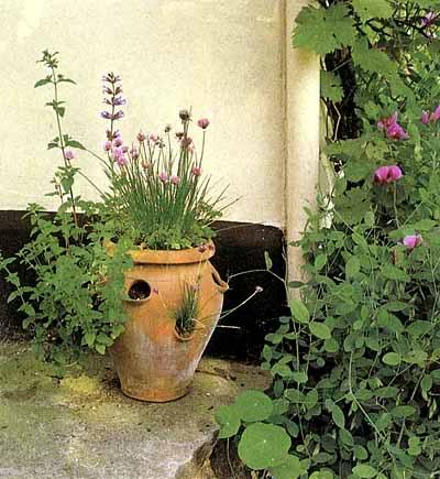 Aiuto Piccolo Giardino Un Quadrato Di Giardino
