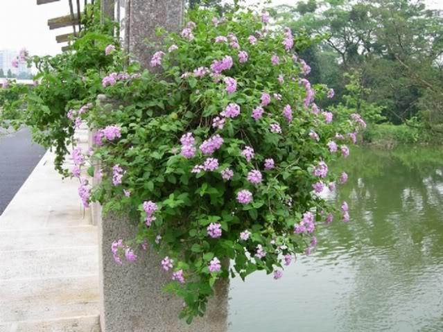 Balcone fiorito a pieno sud (piante per terrazzo resistenti al caldo ...