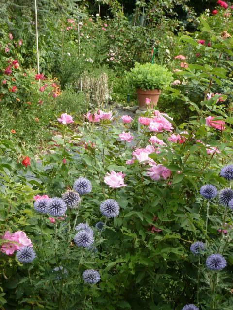 Il mio giardino in estate luglio e agosto fioriti un quadrato di giardino - Il giardino d estate ...