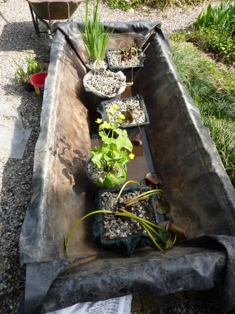 Mini laghetti in 1 tinozza miei sistemati ninfee vaso for Vasca giardino pesci