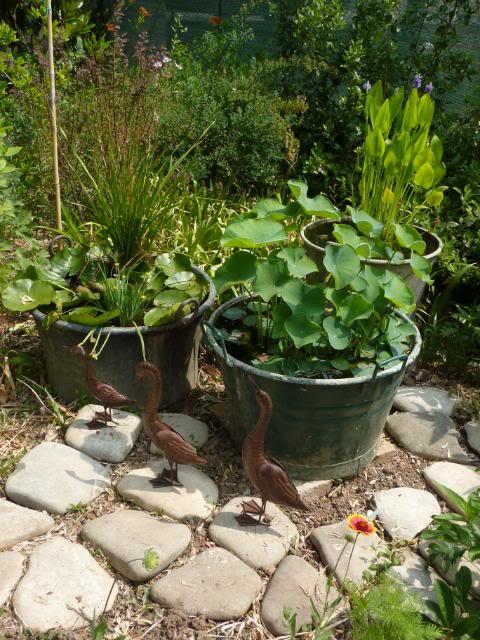 Mini laghetti in 1 tinozza miei sistemati ninfee vaso for Piante palustri laghetto