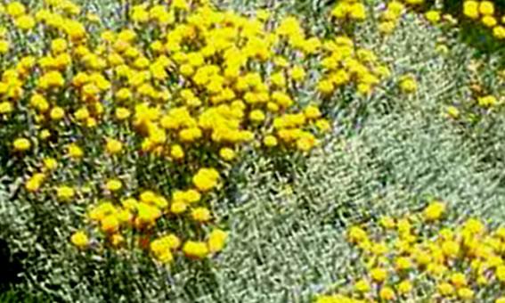 lista di piante ornamentali e aromatiche da giardino da