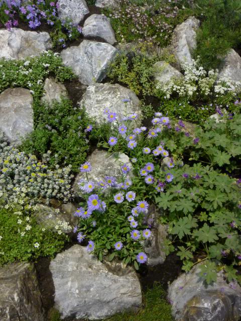 Sono nuova e quesito su porzione di giardino come fare un piccolo roccioso pagina 2 un - Creare giardino roccioso ...