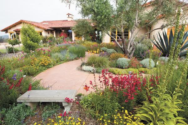 Fiori attorno agli ulivi un quadrato di giardino for Fiori per giardino perenni
