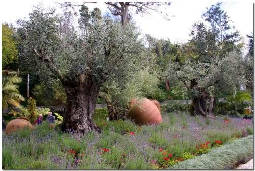 Fiori attorno agli ulivi un quadrato di giardino - Giardino con ulivi ...