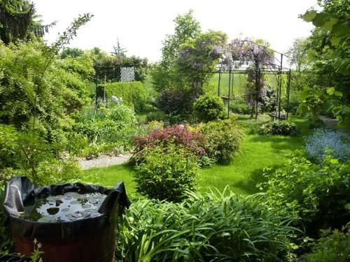 Un laghetto mini in una tinozza for Laghetto giardino zanzare