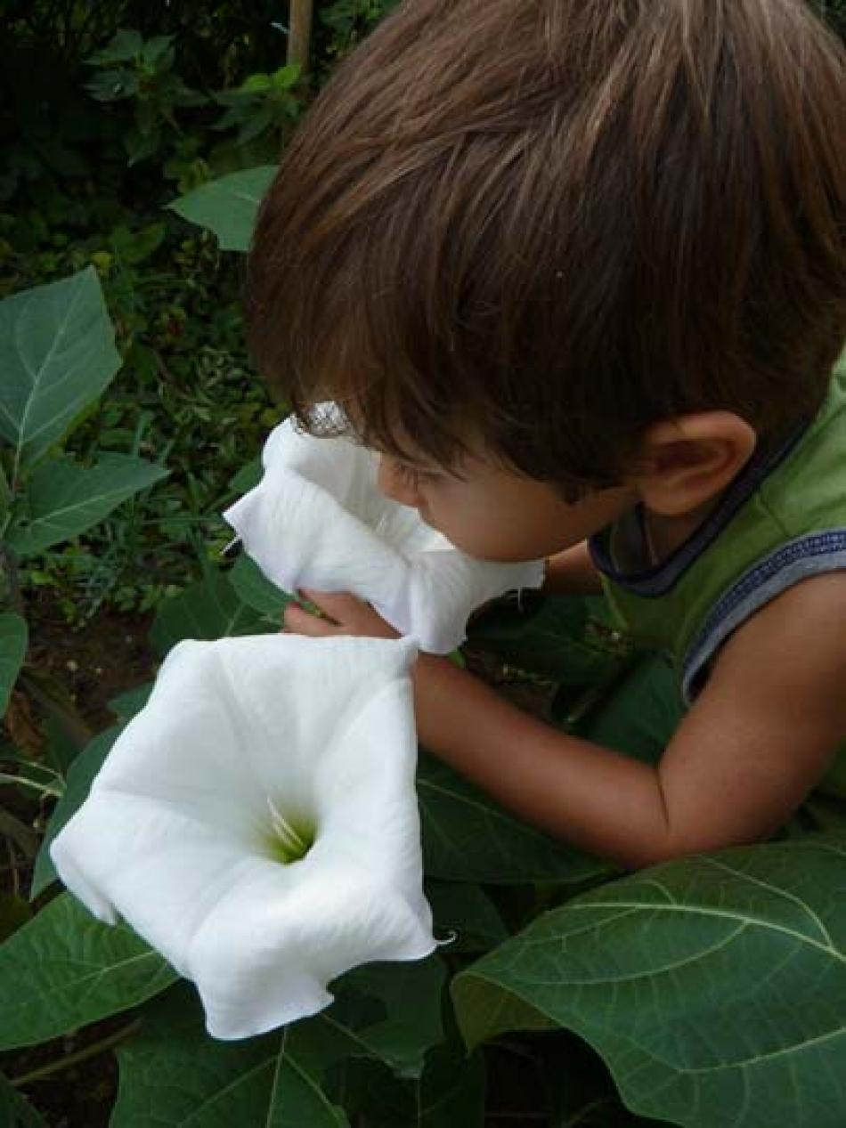 Bianchi Fiori Odorosi.P Di Profumato Fiori E Piante Profumati Per Vasi