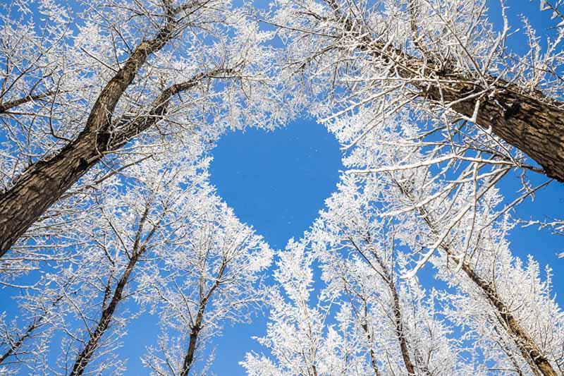 alberi_ghiaccio_poesia_giardino.jpg