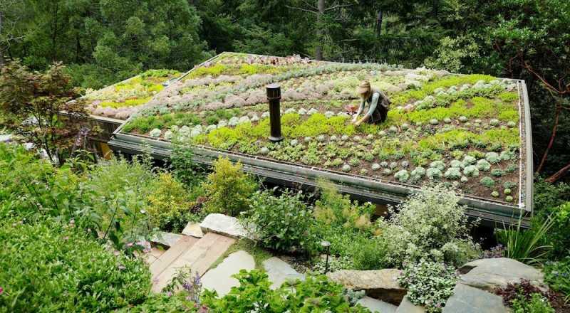 sedum_tetto_verde_pensile_giardino.jpg