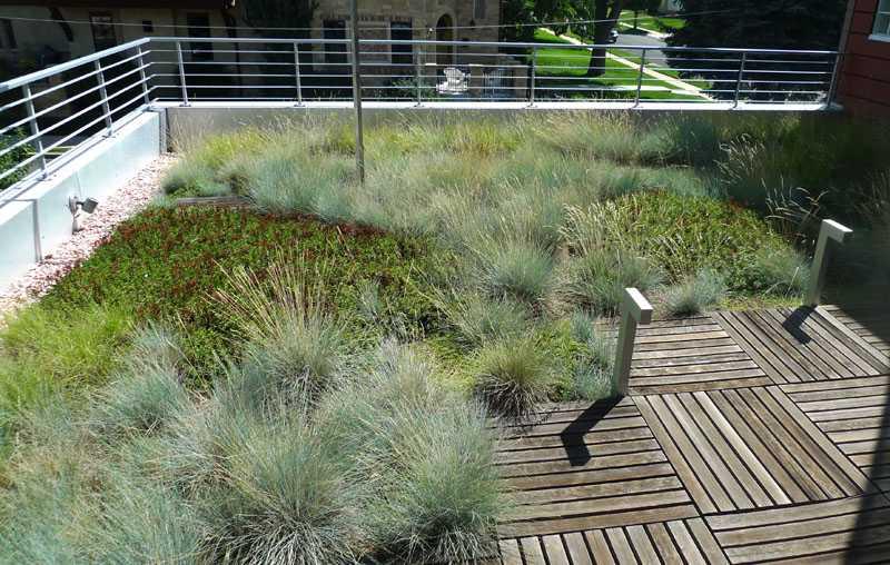 sedum_tetto_verde_pensile_giardino_2.jpg